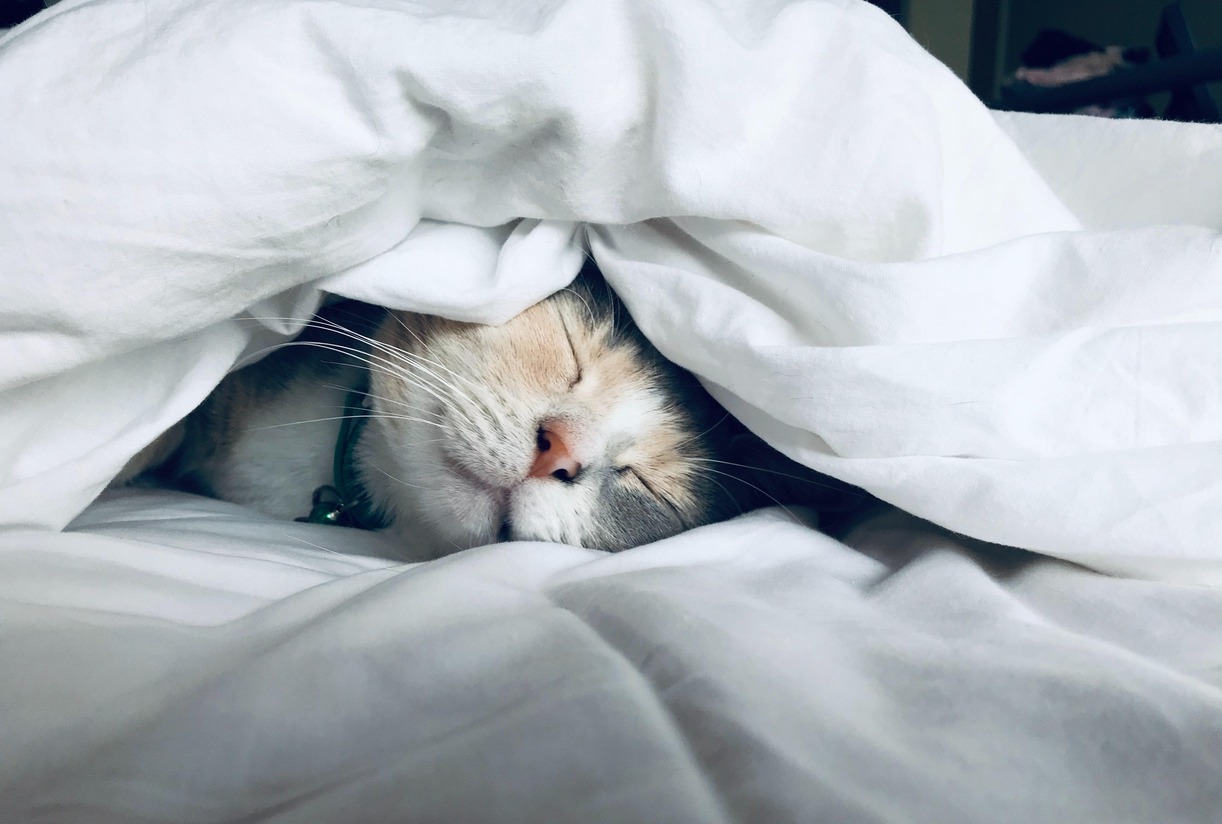 ベッドシーツ